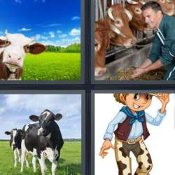 Solutions-4-images-1-mot-VACHE