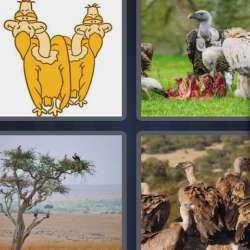 Solutions-4-images-1-mot-VAUTOUR