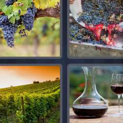 Solutions-4-images-1-mot-VIGNOBLE