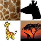 Solutions-4-images-1-mot-GIRAFE