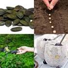 Solutions-4-images-1-mot-GRAINES