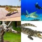 Solutions-4-images-1-mot-REPTILES