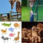 Solutions-4-images-1-mot-Zoo
